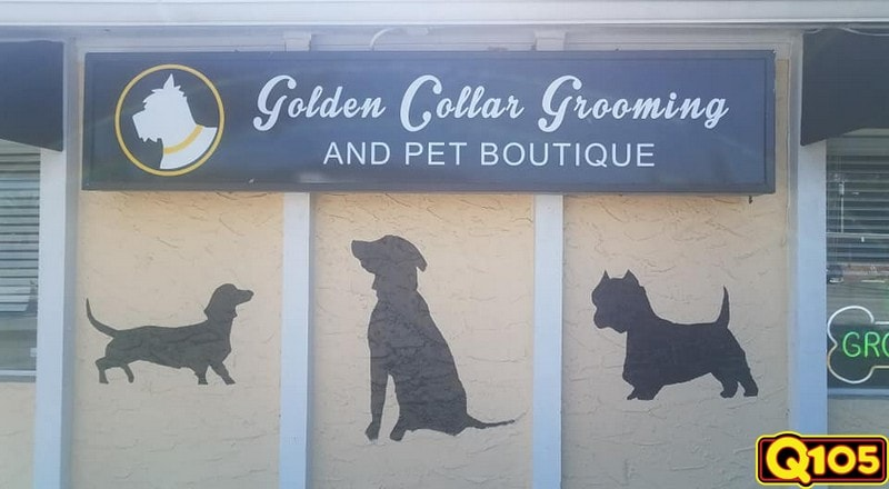 Congratulations to our winner of Undercover Office this week; Golden Collar Grooming! We stopped by to treat them Shell's Seafood on Tuesday, February 5th.